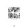 Faire-part naissance photo carré, feuilles aquarelles peintes à la main - Collection Octave
